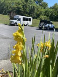flowerbus